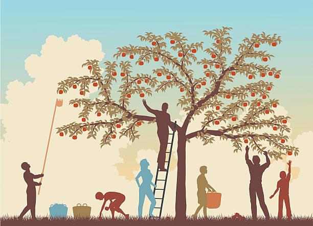 illustrazioni stock, clip art, cartoni animati e icone di tendenza di colorato harvest - raccogliere frutta