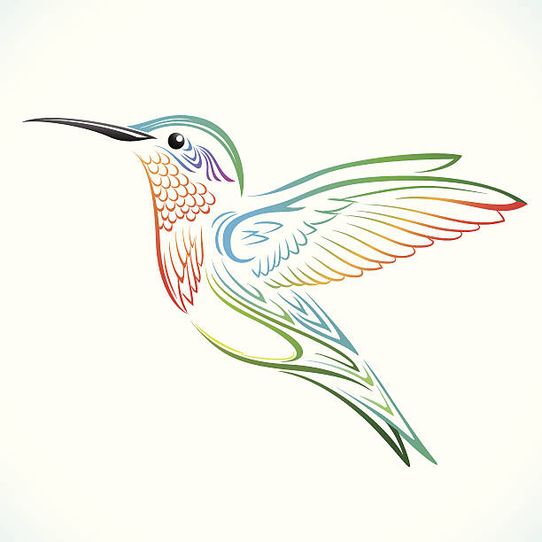 colorful humming bird - hummingbird stock illustrations