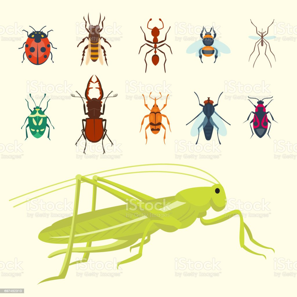 Colorful insects icons isolated wildlife wing detail summer bugs wild vector illustration vector art illustration