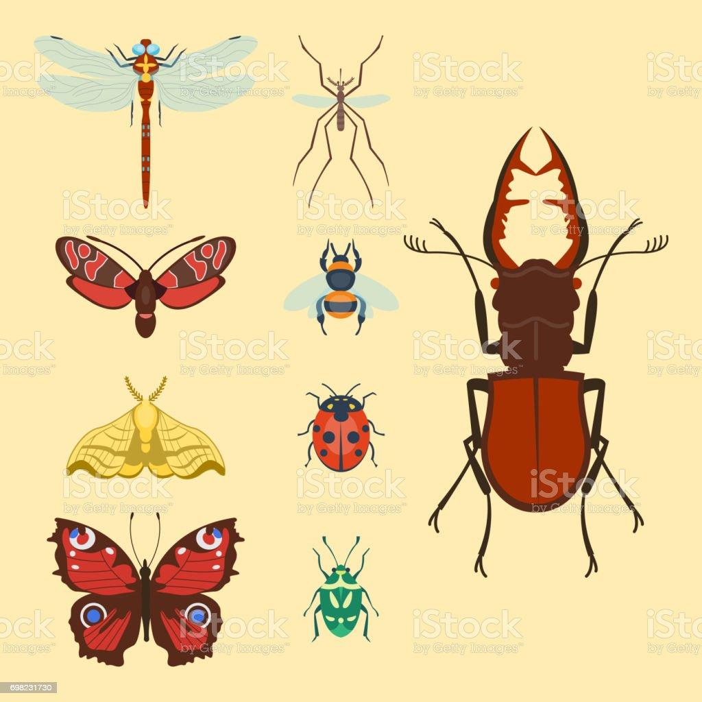 カラフルな昆虫アイコン分離野生動物翼詳細夏虫野生のベクトル図 の