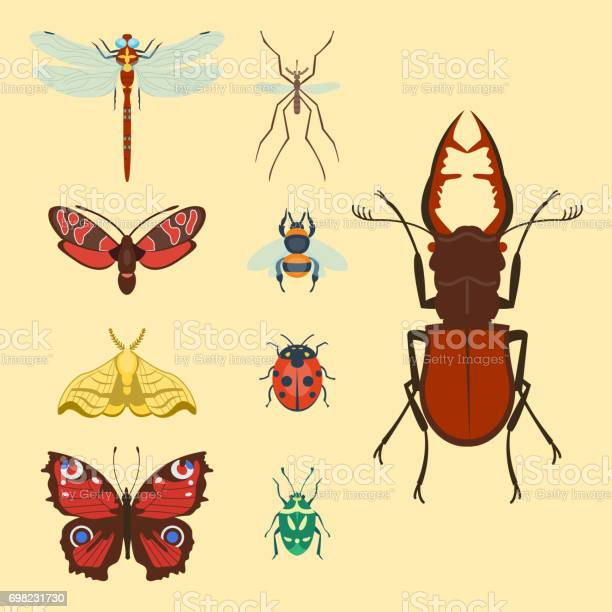Colorful insects icons isolated wildlife wing detail summer bugs wild vector id698231730?b=1&k=6&m=698231730&s=612x612&h=uzjabpo2mp8jucutpffhqttk4xjvuehqq4ns5tv5hf0=