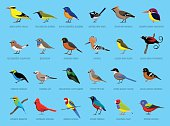 Colorful Little Birds Side View Cartoon Vector Illustration