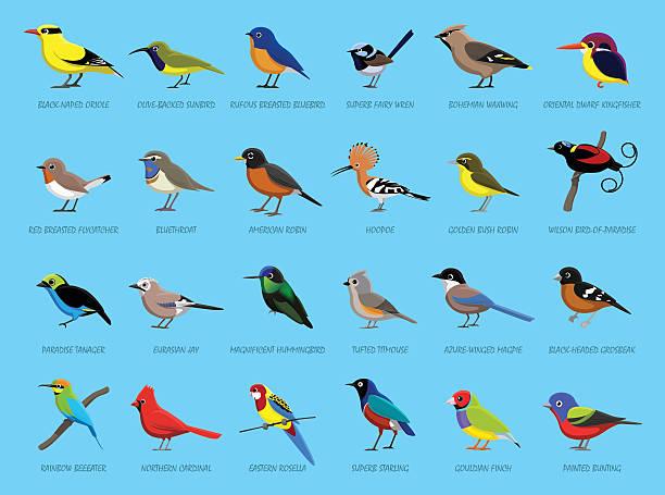 Colorful Little Birds Side View Cartoon Vector Illustration vector art illustration
