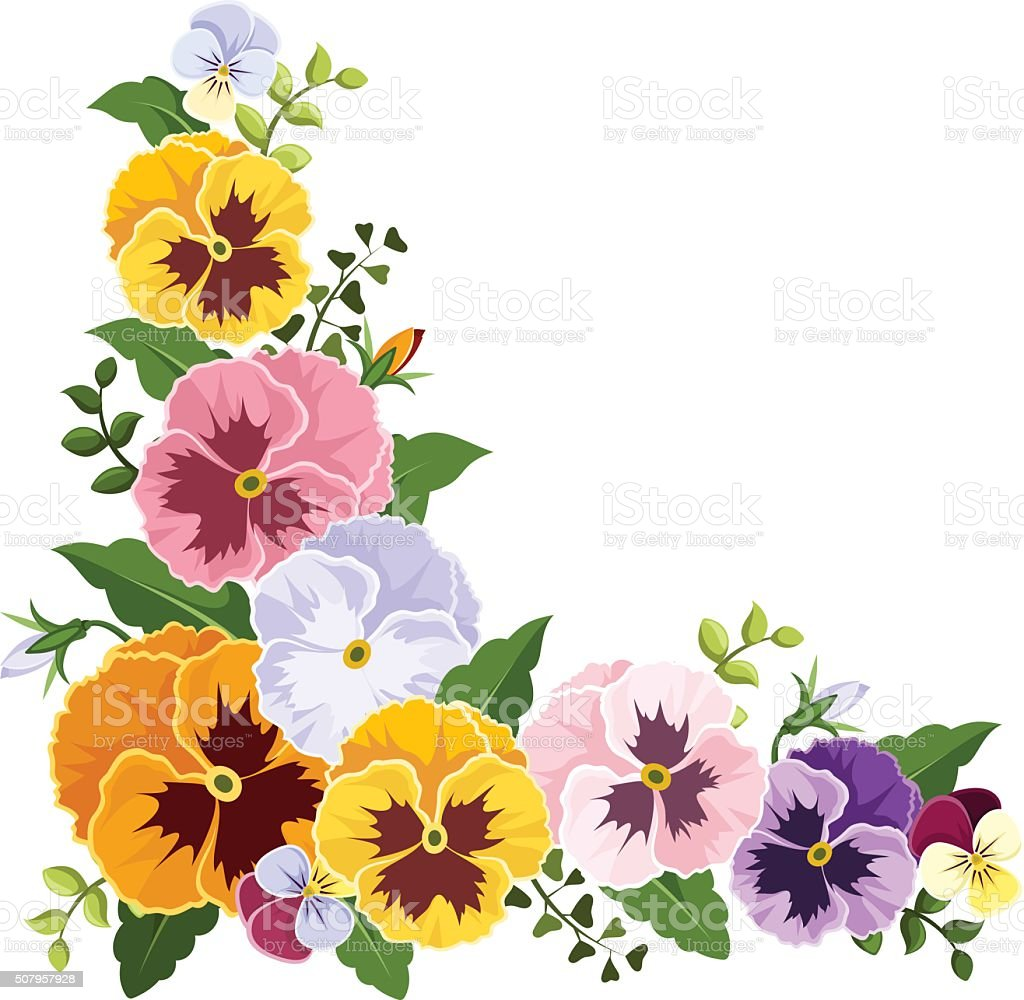 colorful pansy flowers corner vector illustration stock pansy flower clip art pansy clip art free