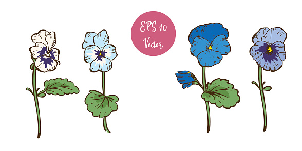 Colorful Pansy Flowers On The Stems Isolated On White Background Floral Vector Stock Illustration - Download Image Now