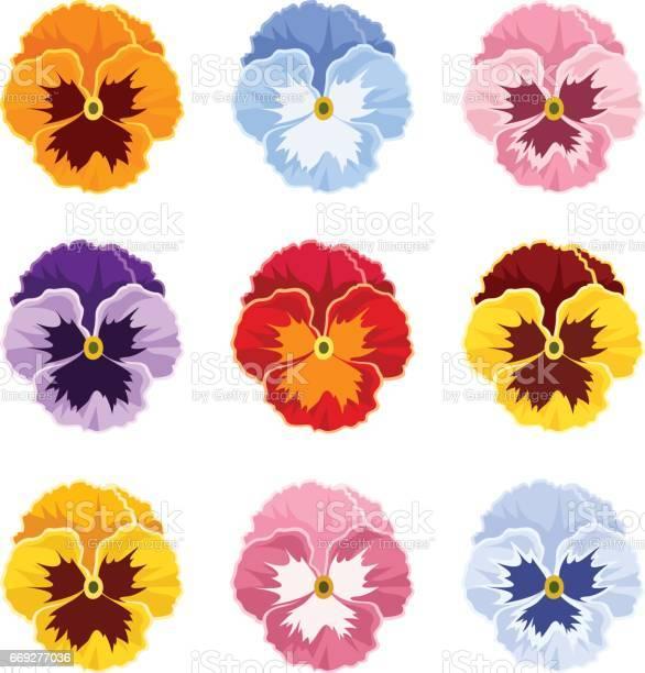 Colorful pansy flowers vector illustration vector id669277036?b=1&k=6&m=669277036&s=612x612&h=igbqkaeuvala7vj dfulxfqhh7jcwpec3wkjvvrdbya=