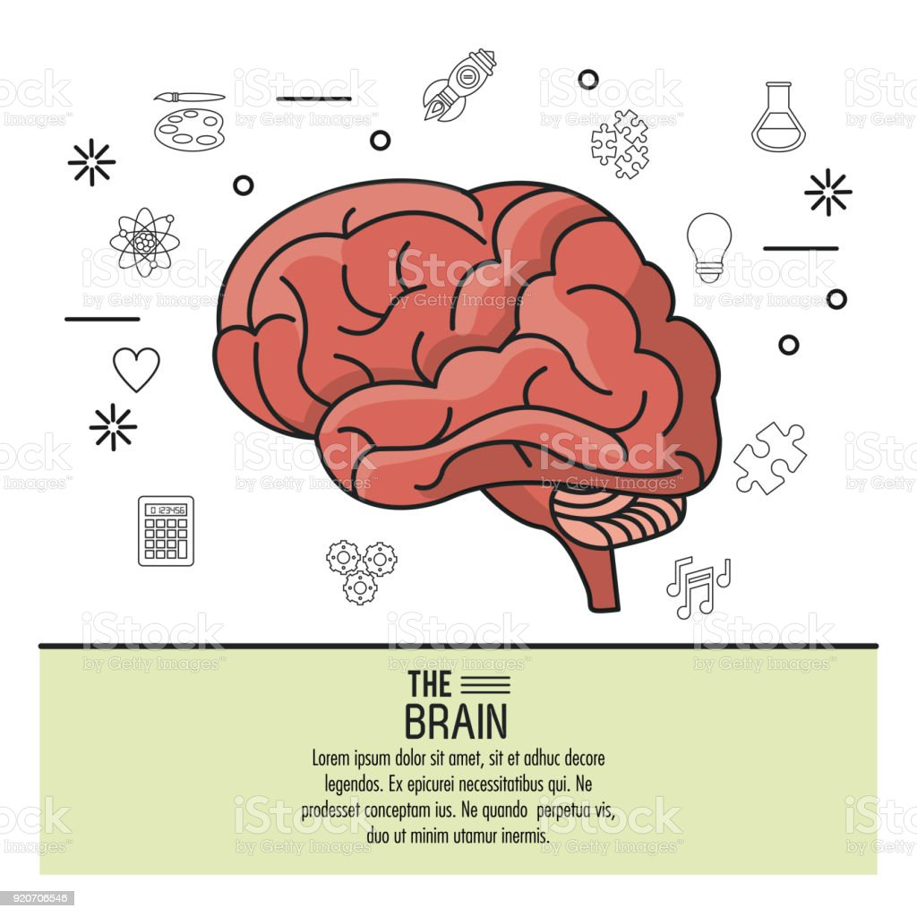 Colorful Poster The Brain With Monochrome Icons In Background Of ...