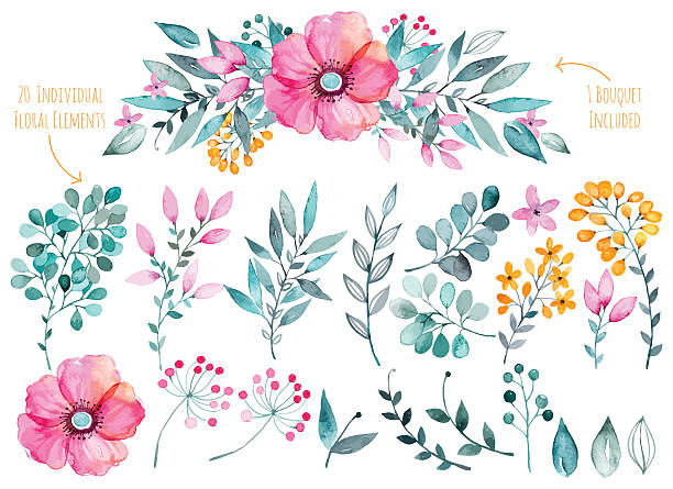 Colorful purple floral collection with leaves and flowers,drawing watercolor. Vector floral set.Colorful purple floral collection with leaves and flowers,drawing watercolor.Colorful floral collection with flowers+1 beautiful bouquet.Set of floral elements for your compositions. single flower stock illustrations
