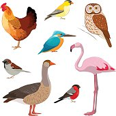 Colorful realistic bird collection.