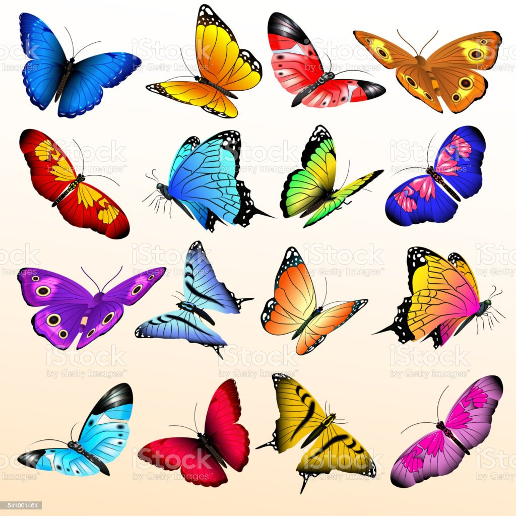 Colorful realistic butterflies big vector set vector art illustration