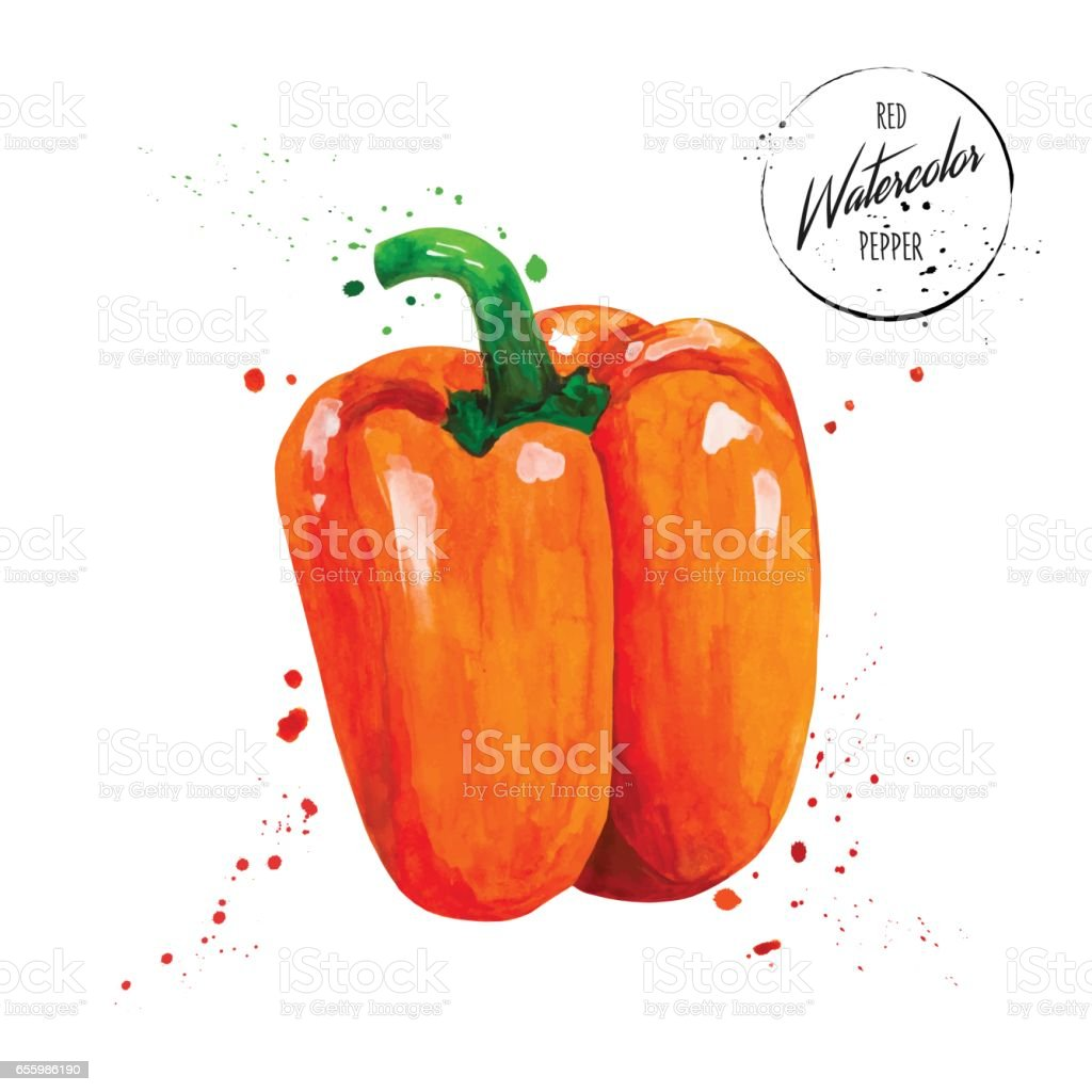 Colorful red pepper painted watercolor vector art illustration
