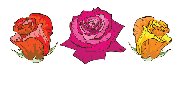 Colorful Rose Flowers Isolated On White Background Floral Vector Stock Illustration - Download Image Now