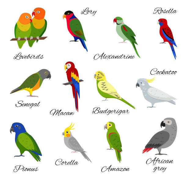ilustrações de stock, clip art, desenhos animados e ícones de colorful set of parrot icons - bills couple