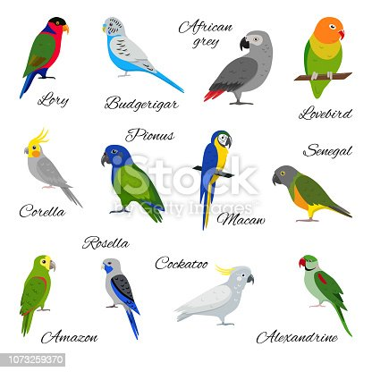 Colorful collection of parrot icons. Bird pet symbols set isolated on white background.