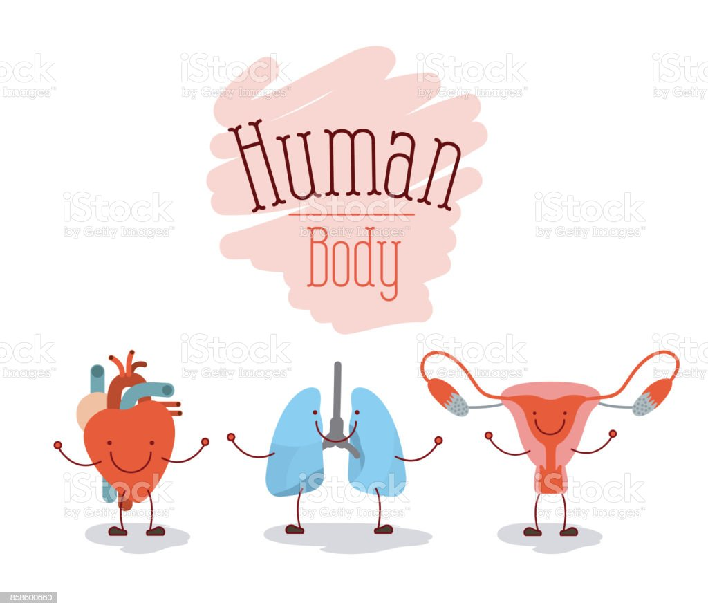 colorful silhouette caricature happy face set human body systems vector art illustration