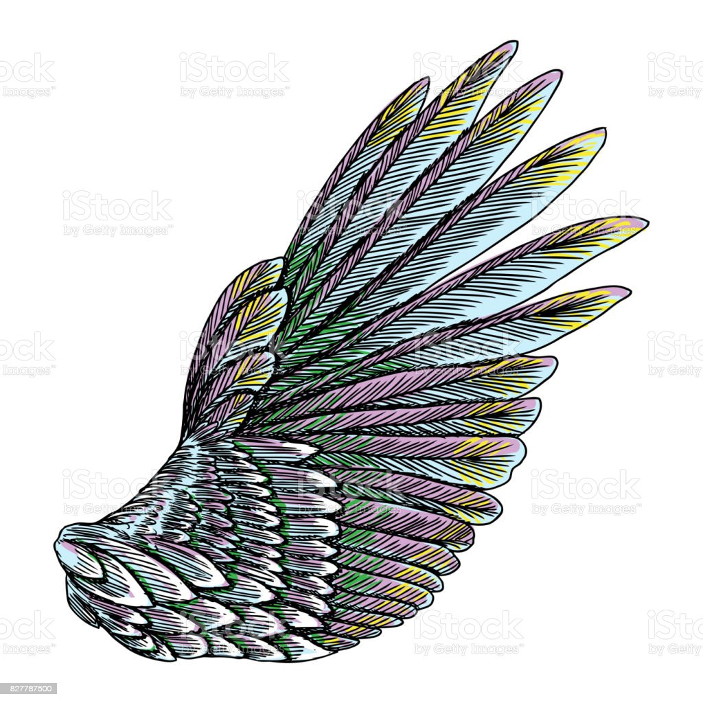 colorful single eagle bird or angel wing colourful etched woodcut