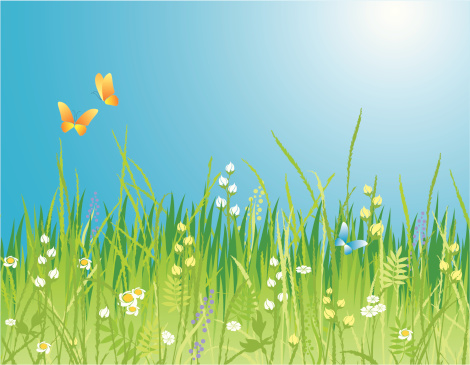 Colorful spring background with flowers and butterflies