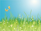 Flowers, grass and butterfly. A beautiful meadow!