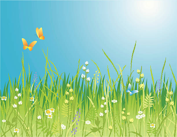 Colorful spring background with flowers and butterflies Flowers, grass and butterfly. A beautiful meadow! tranquil scene stock illustrations