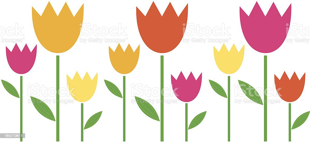 Colorful Spring Tulips In Row Isolated On White Stock ...