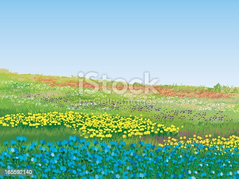 istock A colorful summer meadow on a nice day 165592140