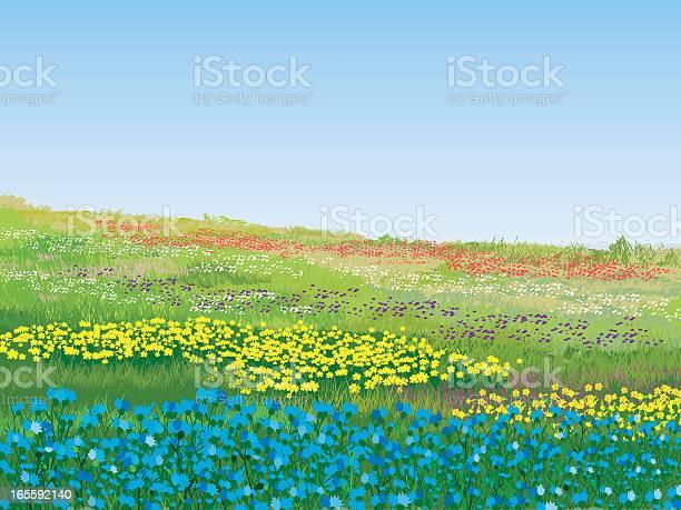 Colorful summer meadow on a nice day vector id165592140?b=1&k=6&m=165592140&s=612x612&h=6 2qbfclhnankecay27kc93x trievcc1gy 1ar9734=