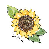 Colorful summer sketch, watercolor, marker copic imitaton style. Bright and blurred sunflower with leaves. Lettering inscription sunflower. big yellow flower. Hand drawn isolated illustration