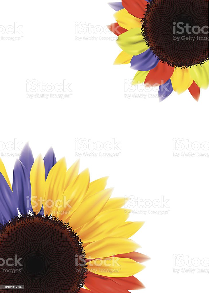 colorful sunflower royalty-free stock vector art