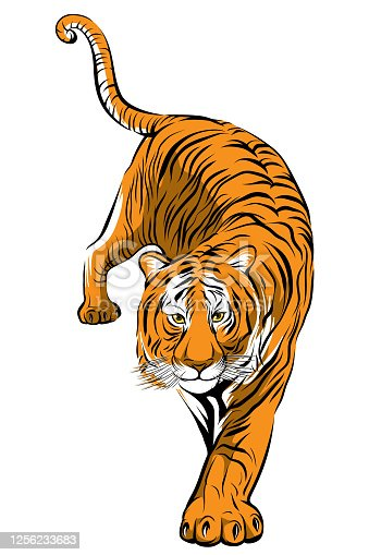 Colorful tiger step forward vector image
