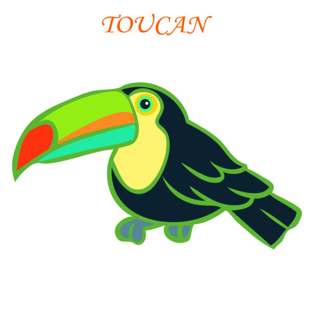 Colorful toucan illustration vector art illustration