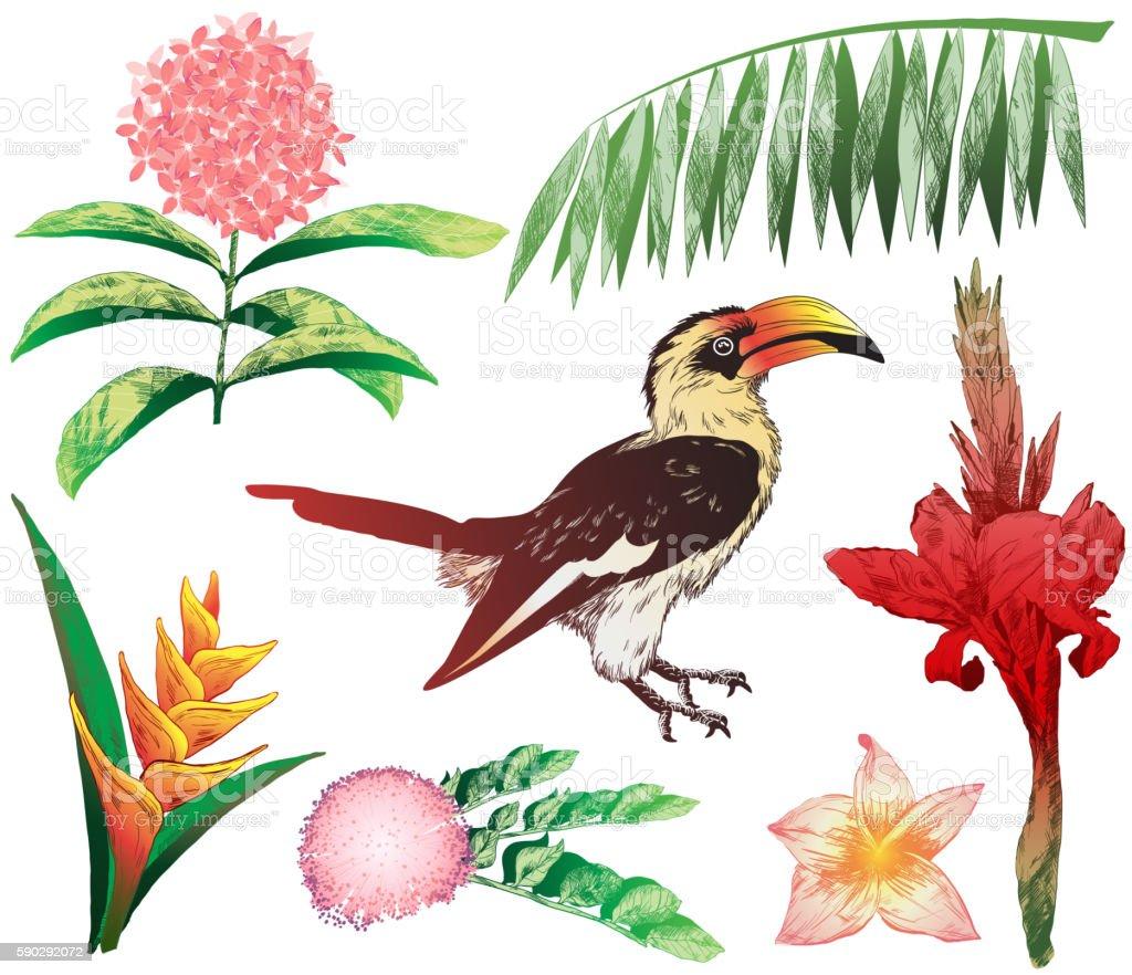 colorful tropical elements for your design (jungle plants and Toucan) royaltyfri colorful tropical elements for your design-vektorgrafik och fler bilder på beskrivande färg