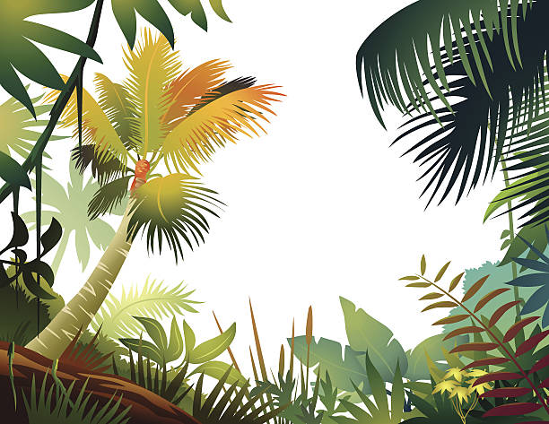 Colorful Tropical Frame Tropical frame. amazon stock illustrations