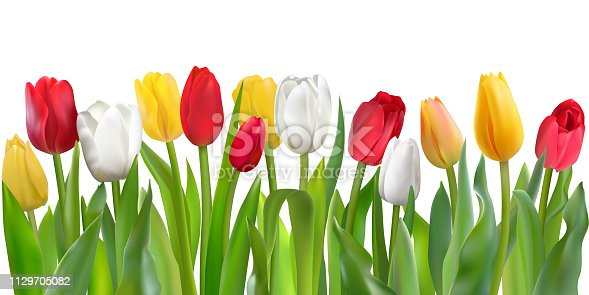 istock Colorful tulips pattern 1129705082