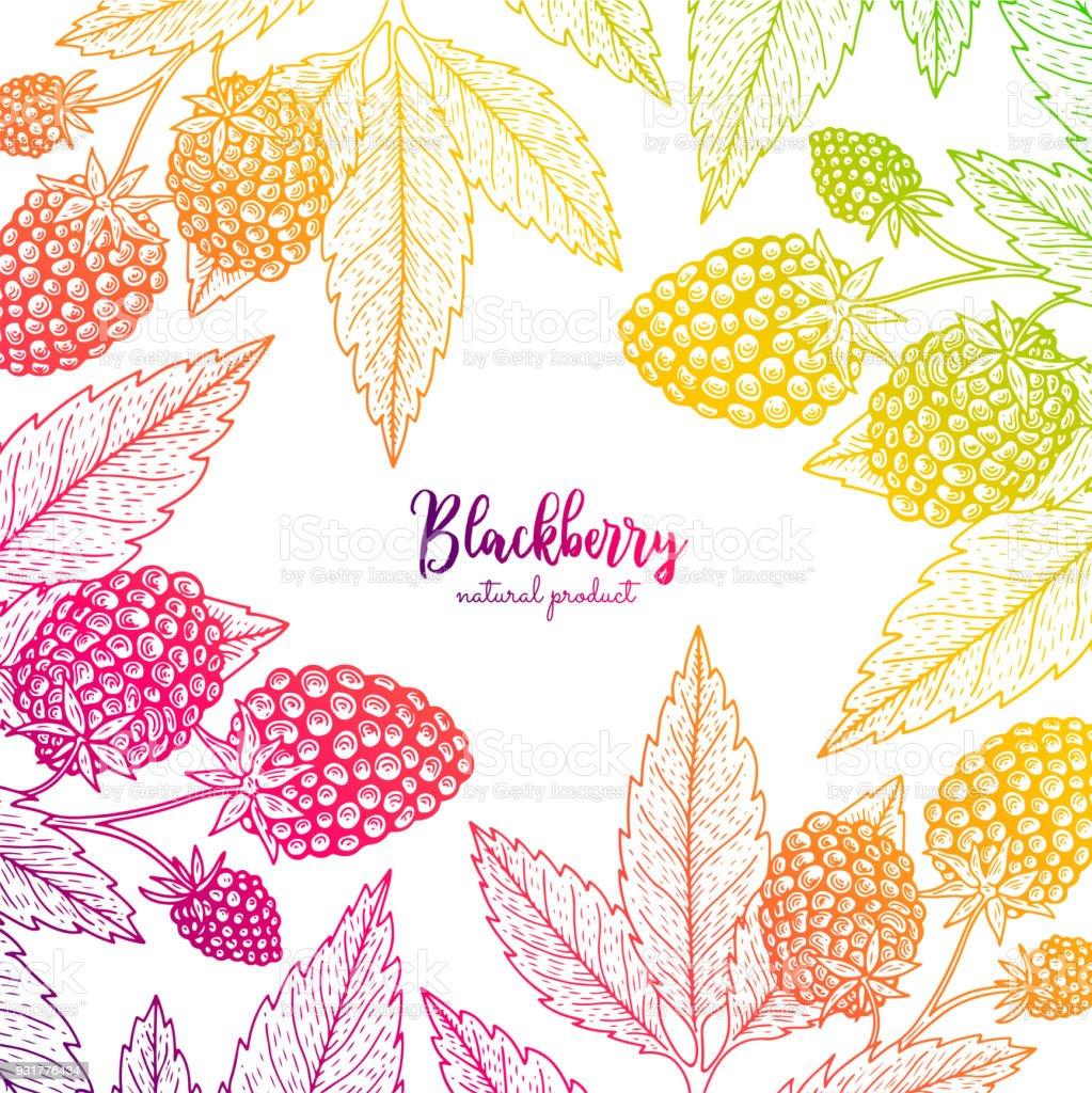 Ilustración de Marco Colorido Vector Con Blackberry Plantilla De ...