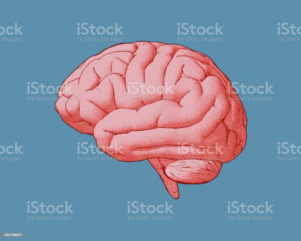 Colorful vintage brain illustration isolated on blue BG royalty-free colorful vintage brain illustration isolated on blue bg stock illustration - download image now