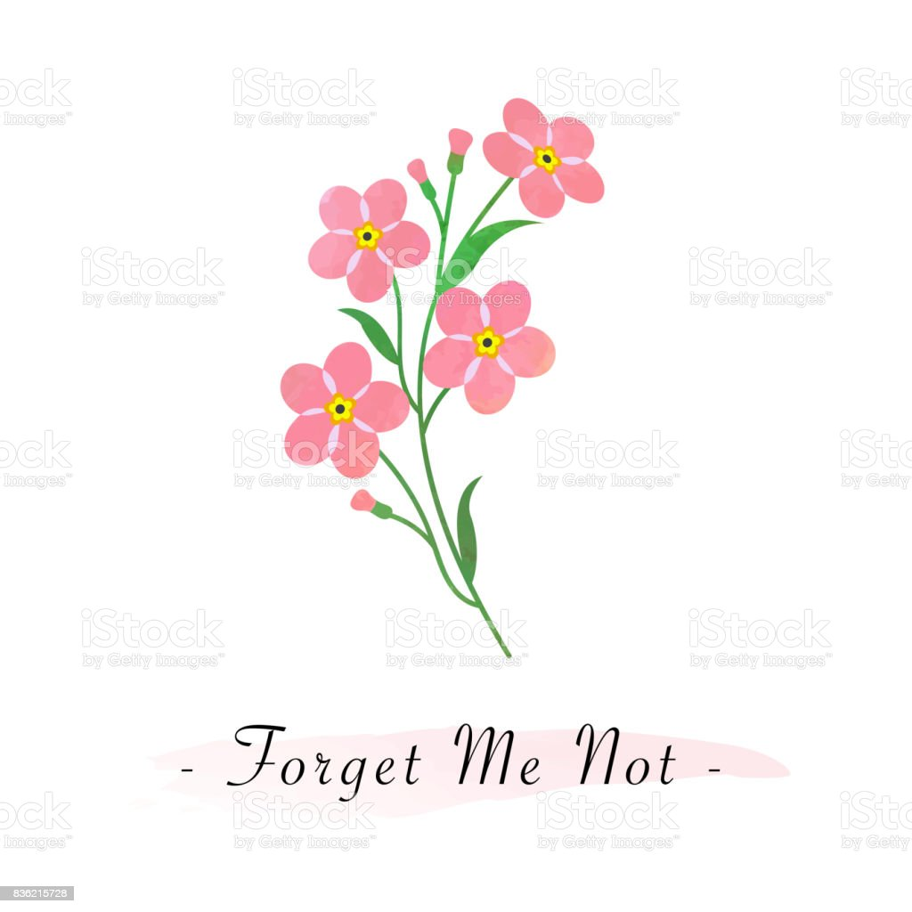 Colorful Watercolor Texture Vector Botanic Garden Flower Pink Forget