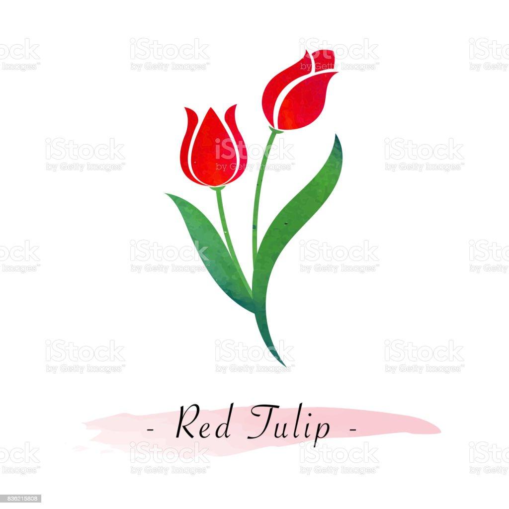 Renkli Sulu Boya Doku Vektör Botanik Bahçe çiçek Kırmızı Lale Stok