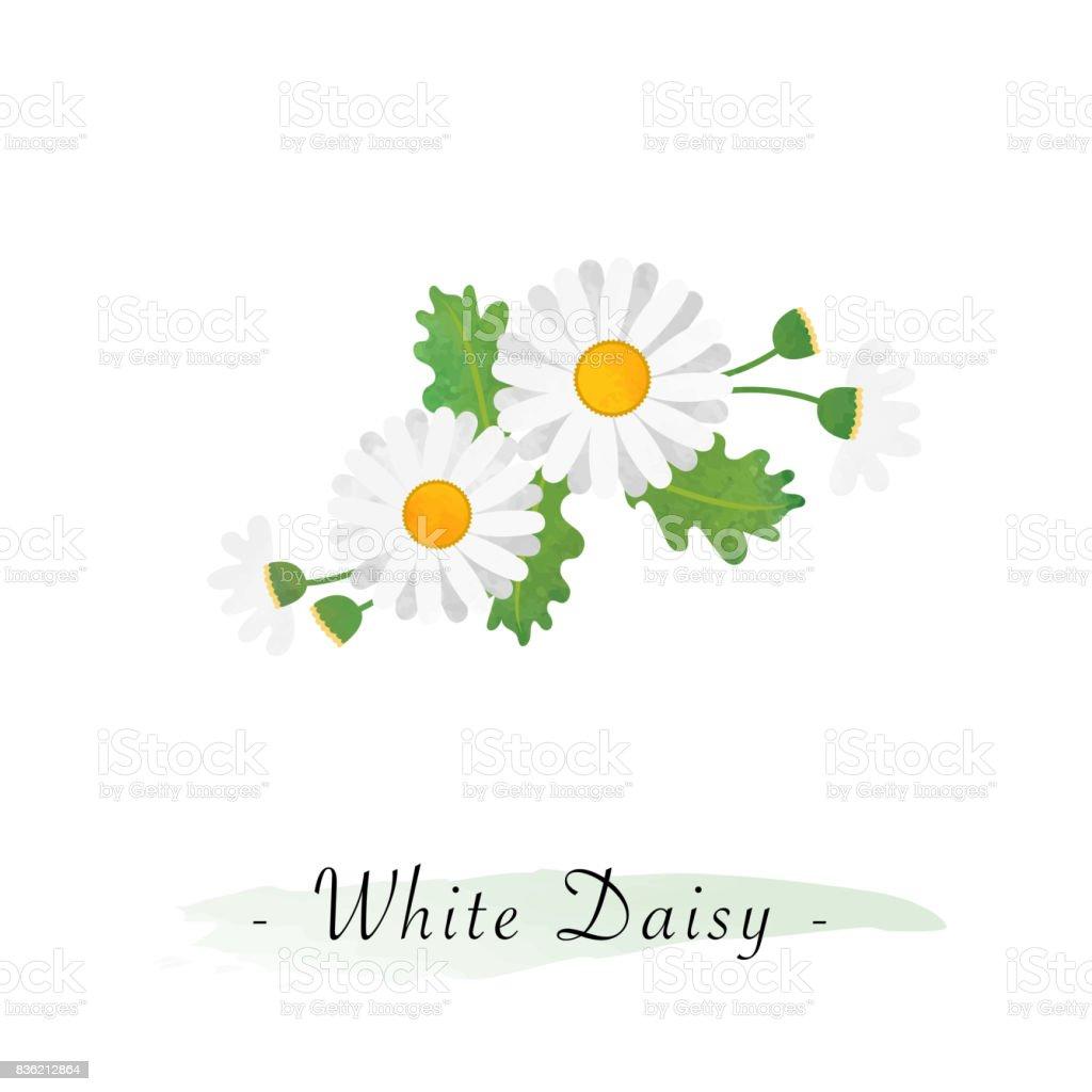 Renkli Sulu Boya Doku Vektor Botanik Bahce Cicek Beyaz Papatya