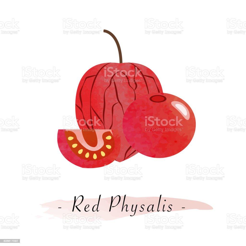 Colores acuarela textura vector rojo saludable fruta uchuva physalis - ilustración de arte vectorial