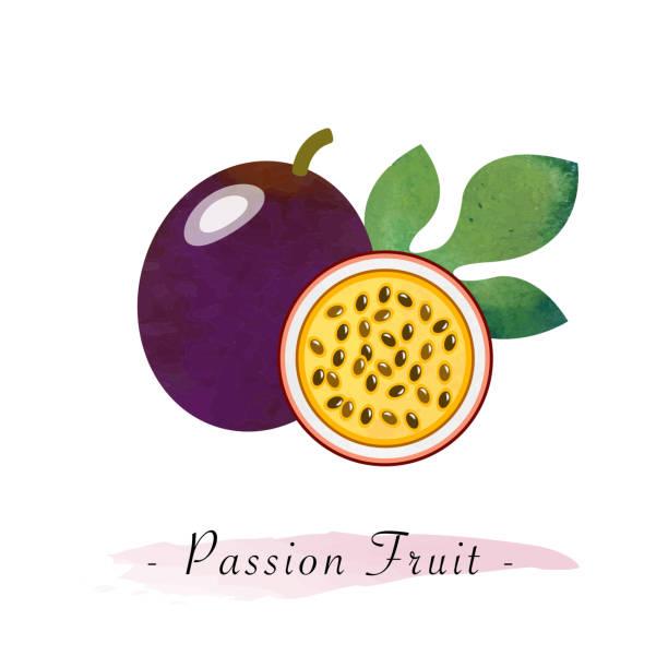 illustrations, cliparts, dessins animés et icônes de fruit de la passion saine vecteur texture aquarelle coloré - fruit de la passion