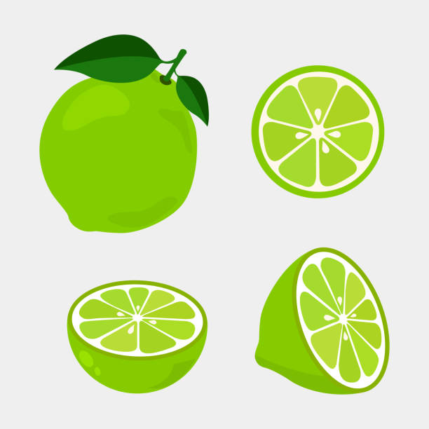 Colorful whole, half and slice lime with green leaf. Colorful whole, half and slice lime with green leaf. Vector illustration isolated on white background. fruit clipart stock illustrations