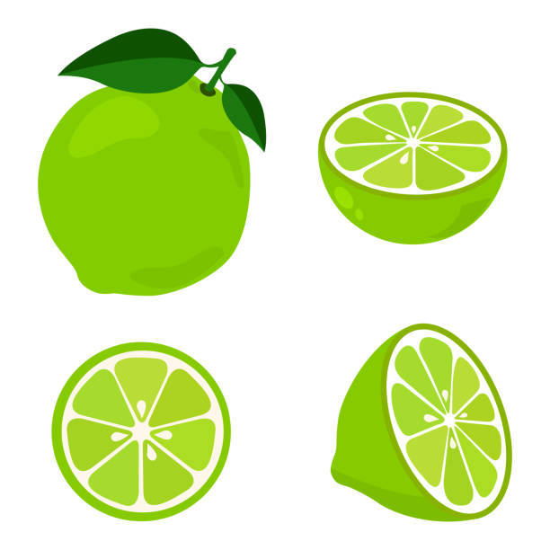 Colorful whole, half and slice lime with green leaf. Vector illustration isolated on white background. Colorful whole, half and slice lime with green leaf. Vector illustration isolated on white background. lime stock illustrations