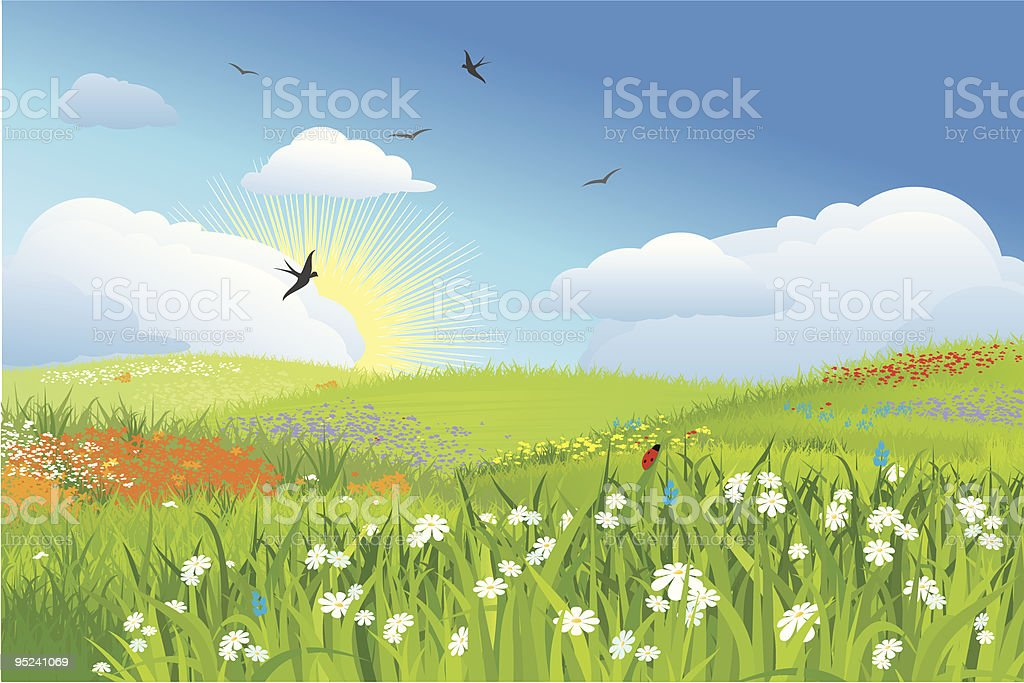 Colorfull meadow / flower and grass,  blue sky  vector royalty-free stock vector art