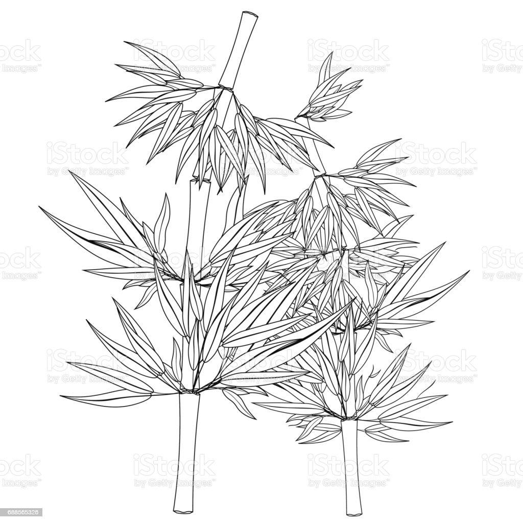 Para Colorear Bambú árbol Tropical China Japón Ilustración De Vector ...