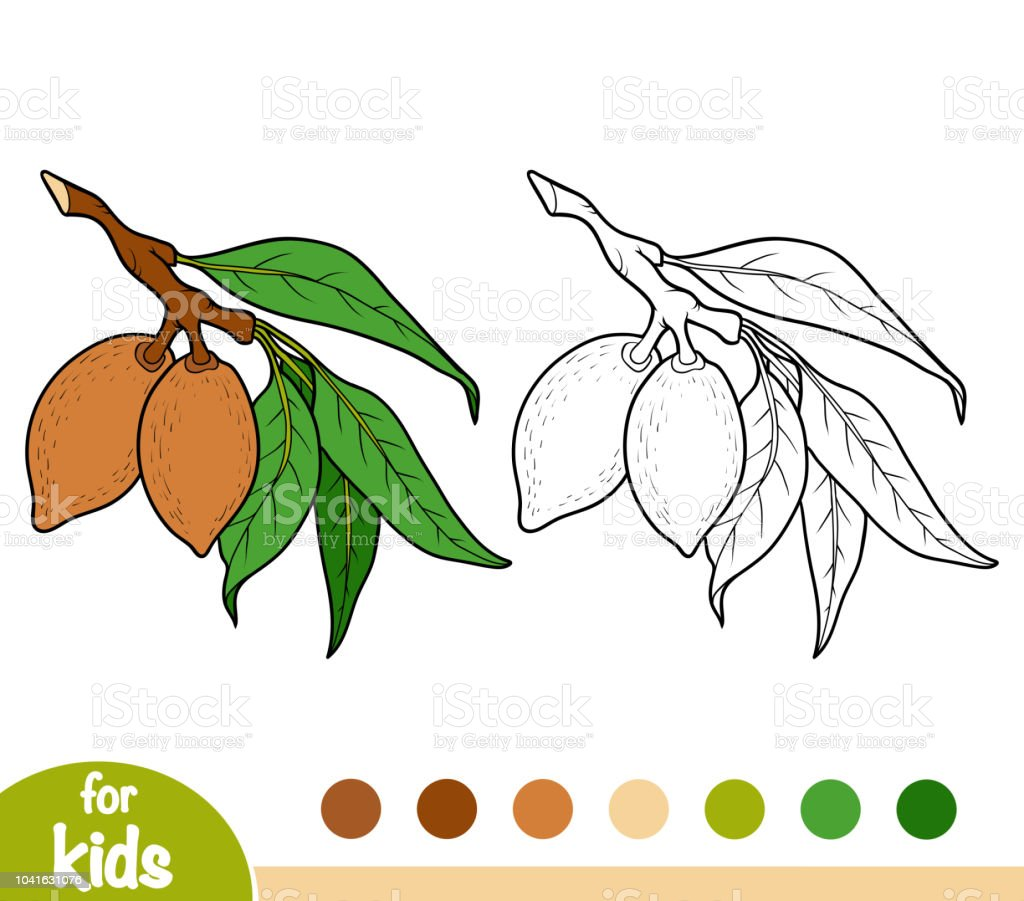 Coloring Book Almond Branch Stock Vector Art More Images Of Almond