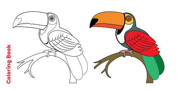 Coloring Book and Toucan