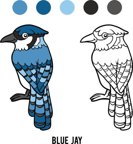 Coloring book, Blue jay vector art illustration