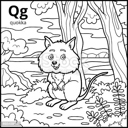 Coloring Book Colorless Alphabet Letter Q Quokka Stock