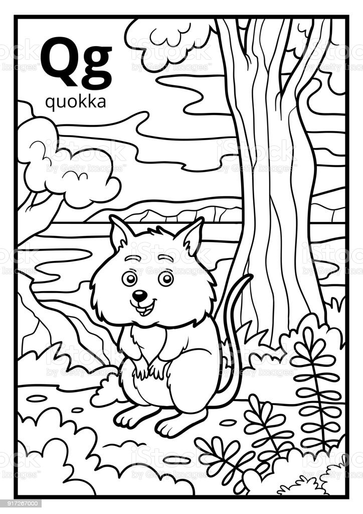 Coloring Book Colorless Alphabet Letter Q Quokka Stock Illustration -  Download Image Now - IStock