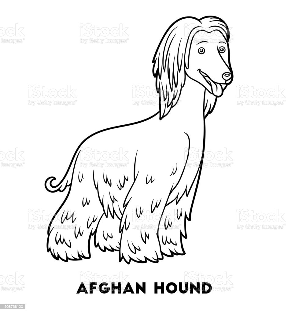 Boyama Kitabi Kopek Irklari Afgan Tazisi Stok Vektor Sanati